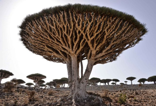10-of-the-strangest-trees-around-the-world-8