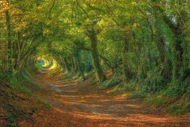 18.-The-Path-Up-To-the-Halnaker-Windmill-in-Sussex-20-Magical-Tree-Tunnels-You-Should-Definitely-Take-A-Walk-Through