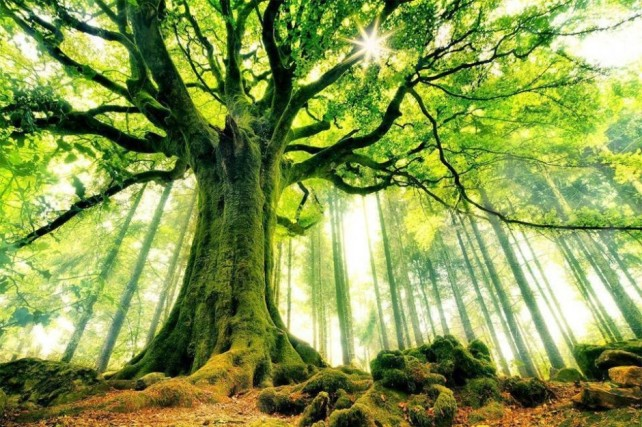 magical-tree-940x626
