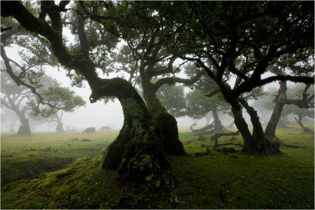 Magical-tree-forest-23785212-998-666