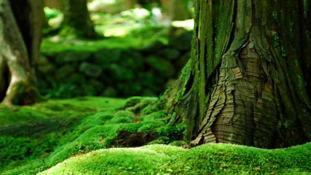 moss-wallpapers-3
