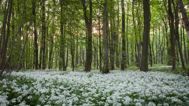 SherwoodForestEngland