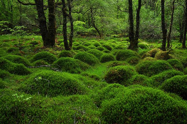 SutherlandsGroveForestScotland