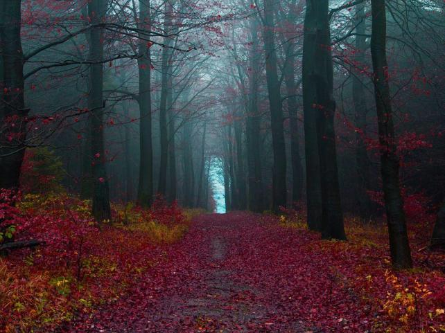 The-Black-Forest-Germany