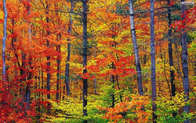 autumn-in-the-forest-wallpaper-7